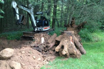 Tree & Brush Removal